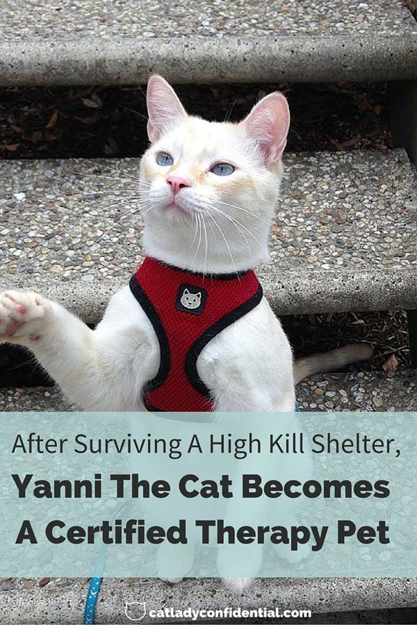 after surviving a high kill shelter yanni the cat becomes