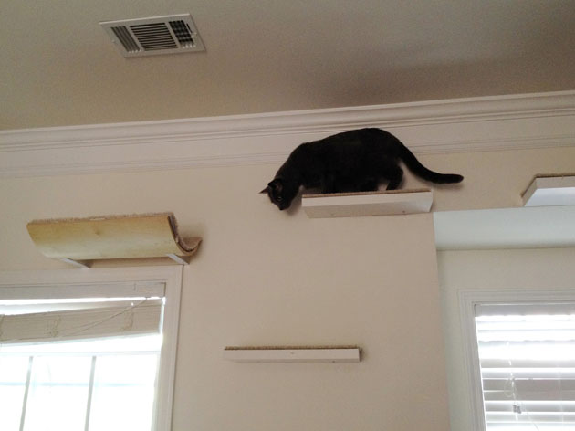 How To Make Cat Shelves That Your Cats Will Love My Book